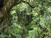 Amazon-amazon-rainforest-33125135-1600-1200